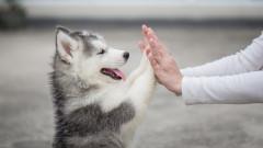 Убиването на кучета за месо е незаконно, реши съд в Южна Корея