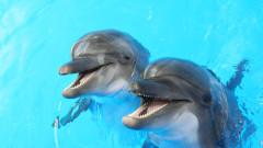 74 000 делфина са регистрирани в българската акватория на Черно море