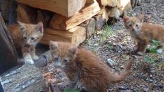 Неизвестен стреля по домашни котки до училище в Горна Оряховица