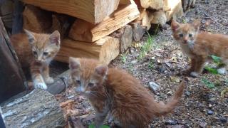 Алармират за масово избиване на котки в Бургас