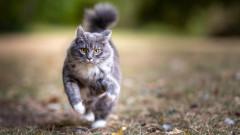 """""""Четири лапи"""" и Столична община тръгват да броят бездомните котки в София"""