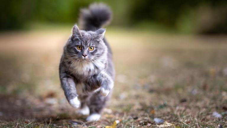"""Учени искат котките да се извеждат на каишки, ЕС каза """"Не"""""""