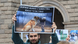 Защитници на животните искат ефективни присъди за агресия срещу животни
