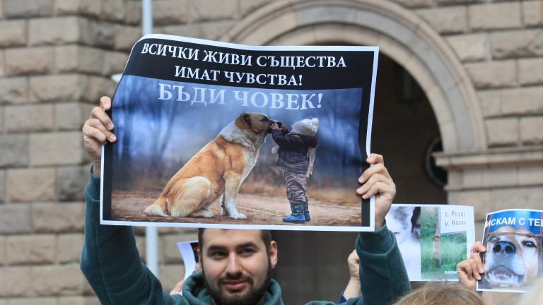 Граждани протестираха заедно с домашните си любимци пред Министерския съвет