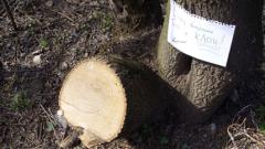Дървосекачи и износители блокират границата с Турция