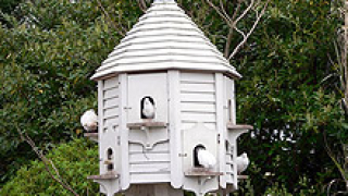 В Монтана въвеждат мерки за изолиране на домашните птици