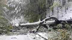 Силен вятър събори дървета в Пампорово, има премазани коли