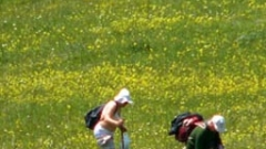 Забраниха събирането на някои билки в Шумен