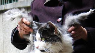 Котка с крила откриха в Китай (галерия)