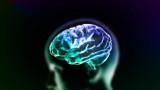 Как мозъкът не ни позволява да мислим за собствената ни смърт