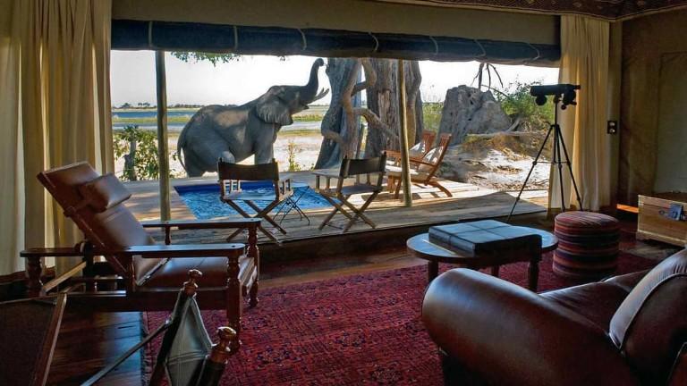 И един слон пред вратата