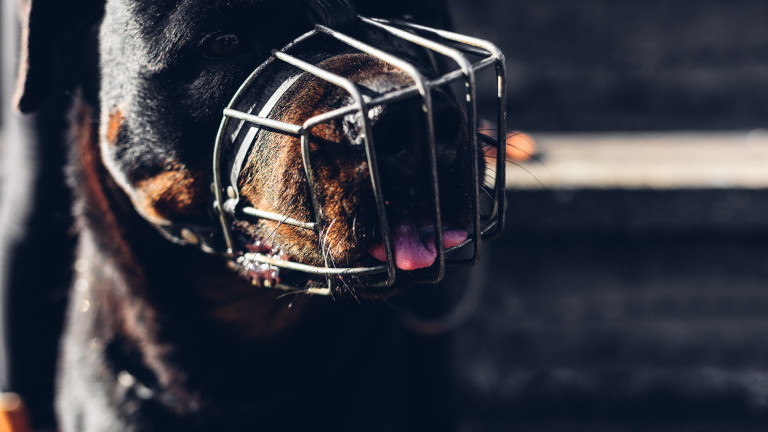Нахапана от куче жена осъди община Хасково