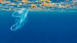 Пластмасата, морските животни и как се променя поведението им