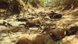 Масова смърт на диви коне в жегата в Австралия