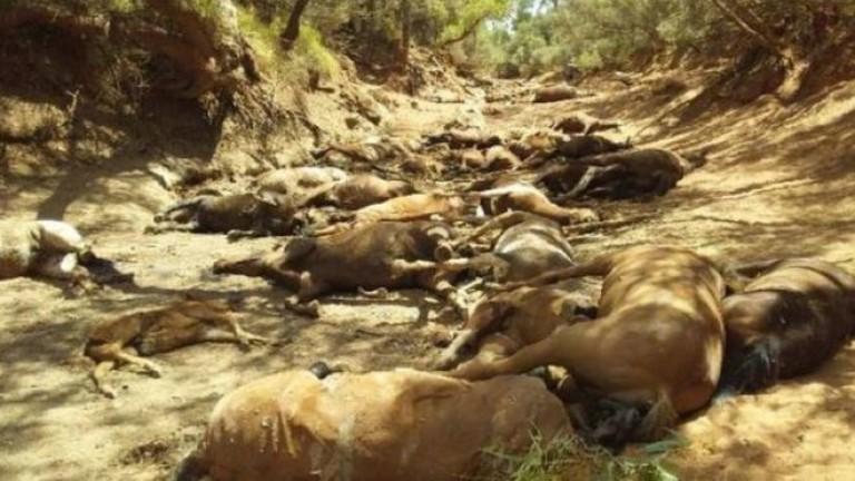 Снимка: Масова смърт на диви коне в жегата в Австралия