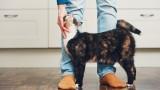 Котките, дълголетието и каква е връзката между тях