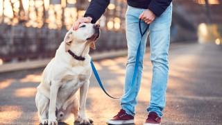 Наръчник за разходките с кучето