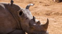 Почина последният северен бял носорог на Земята