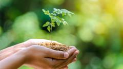 Май и дърветата няма да ни спасят