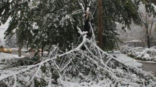 Паднали дървета спряха тока на хижи във Витоша