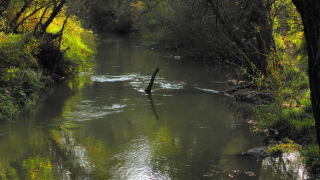 """Глобяват """"Напоителни системи"""" заради пресушаването на река Въча"""
