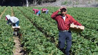 Шотландските фермери пътуват до България и Източна Европа в опит да намерят работници