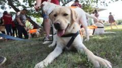 15 кучета-водачи прекрачиха училищния праг