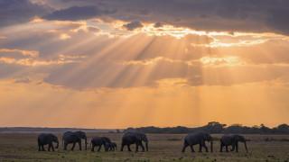 Защо животните масово бягат към полюсите