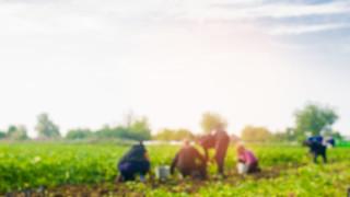 Ще сложи ли край на земеделските бригади във Великобритания Брекзит