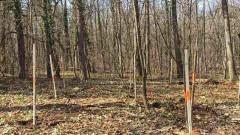 Засаждат 120 сребролистни липи в Борисова градина