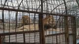 """""""Четири лапи"""" сигнализира ЕК за лоши условия в зоопарковете у нас"""