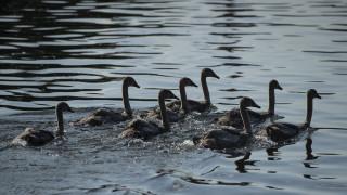 Какви сиви лебеди в икономиката ни очакват през новата година?