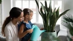 Как правилно да поливаме цветята