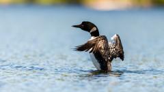 Екоинспекцията в Търново спря ремонта на язовир, за да защити гнездящите птици