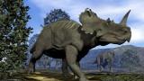 Динозаврите, центрозаврите и откритието, че са боледували от рак на костите