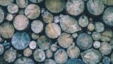 Масови проверки за незаконна дървесина в Пловдивско