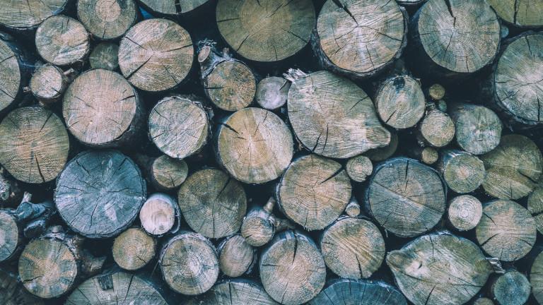 Задържаха 30 кубика незаконна дървесина