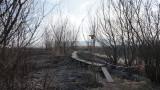 Екоминистърът огледа щетите от пожара в Драгоманското блато