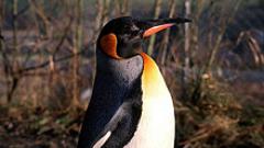 Пингвини в Софийския зоопарк