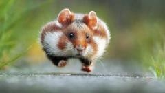 Вижте най-смешните животни на планетата (СНИМКИ)