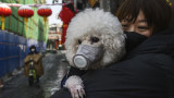 Китай, коронавирусът и как предпазват животните си от заразата