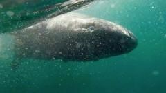 Откриха най-старото животно на планетата