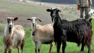 Производители и животни блокираха Рим