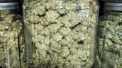 В Калифорния разкриха над 100 китайски оранжерии за марихуана в къщи