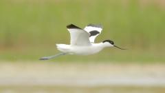 Атанасовското езеро – любимо място на пеликаните и щъркелите за нощувка