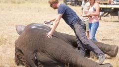 Принц Хари и слоновете (ВИДЕО)