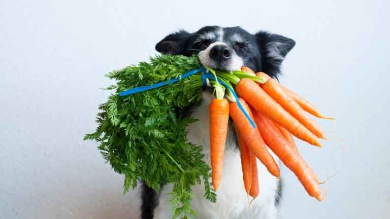 Какви зеленчуци да даваме на кучето