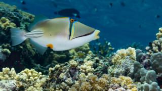 Как се казва рибата с най-дългото име