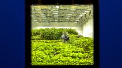 Ню Йорк прие закон за легализиране на марихуаната