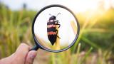Френска фирма, специализираща в автоматизация, строи най-голямата ферма за насекоми в света